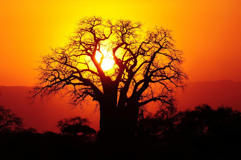 free-wallpaper-desktop-wallpaper-africa-tanzania-baobab-tree-t3rmin4t0r