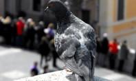 La desconexión vital de La paloma