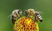 As abellas: os malos non son tan malos