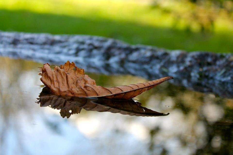 © Andrea Espiñeira Si te gusta Santiago en otoño no puedes permitirte no ver como está el parque de Vista Alegre.