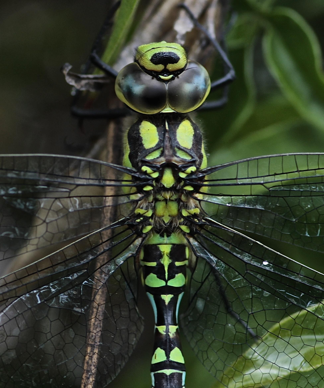 © Andrea Espiñeira Por haber hay hasta libélulas. Pocas, pero hay.