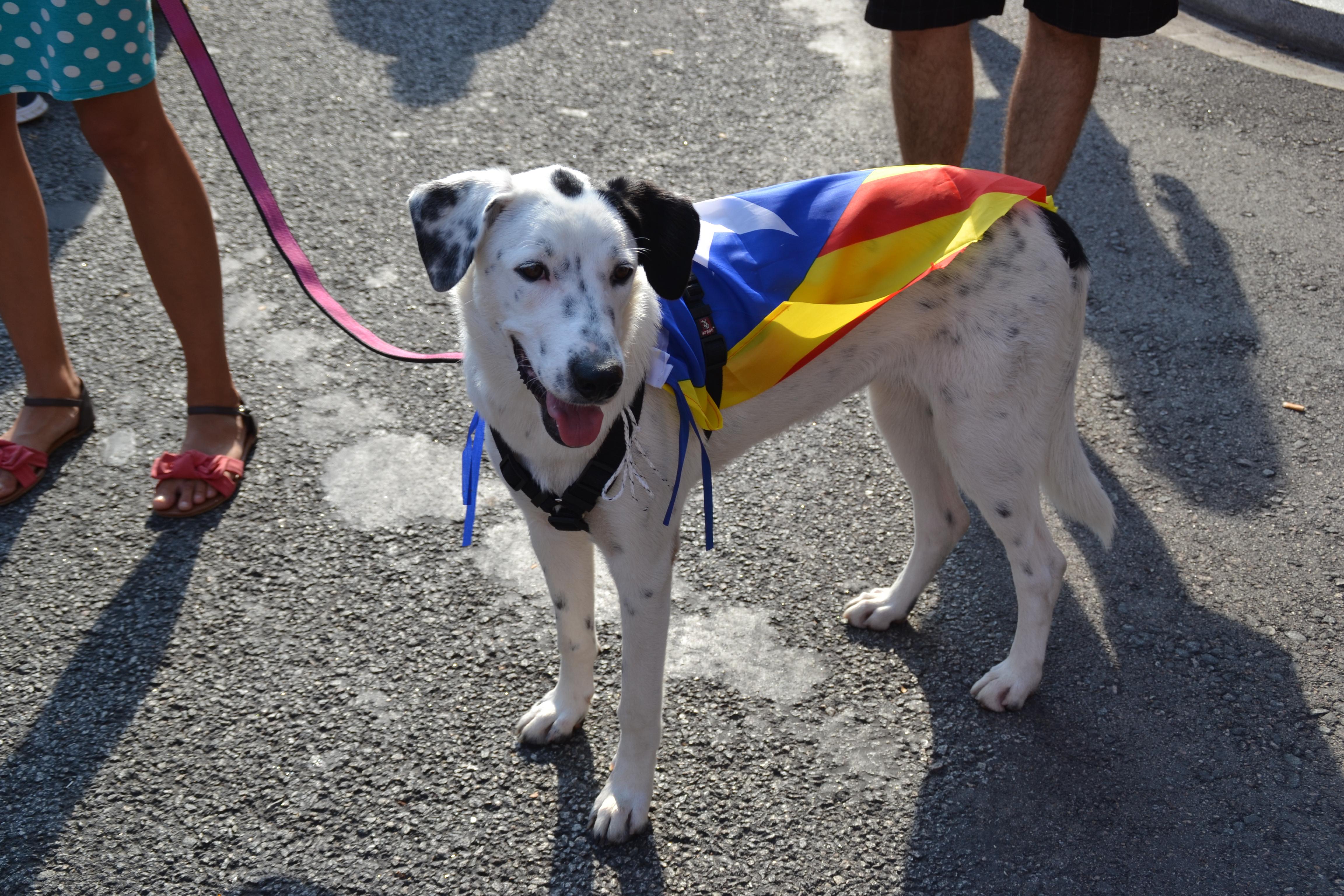 Las mascotas también se vistieron con los colores de Cataluña | © Paula P. Fraga